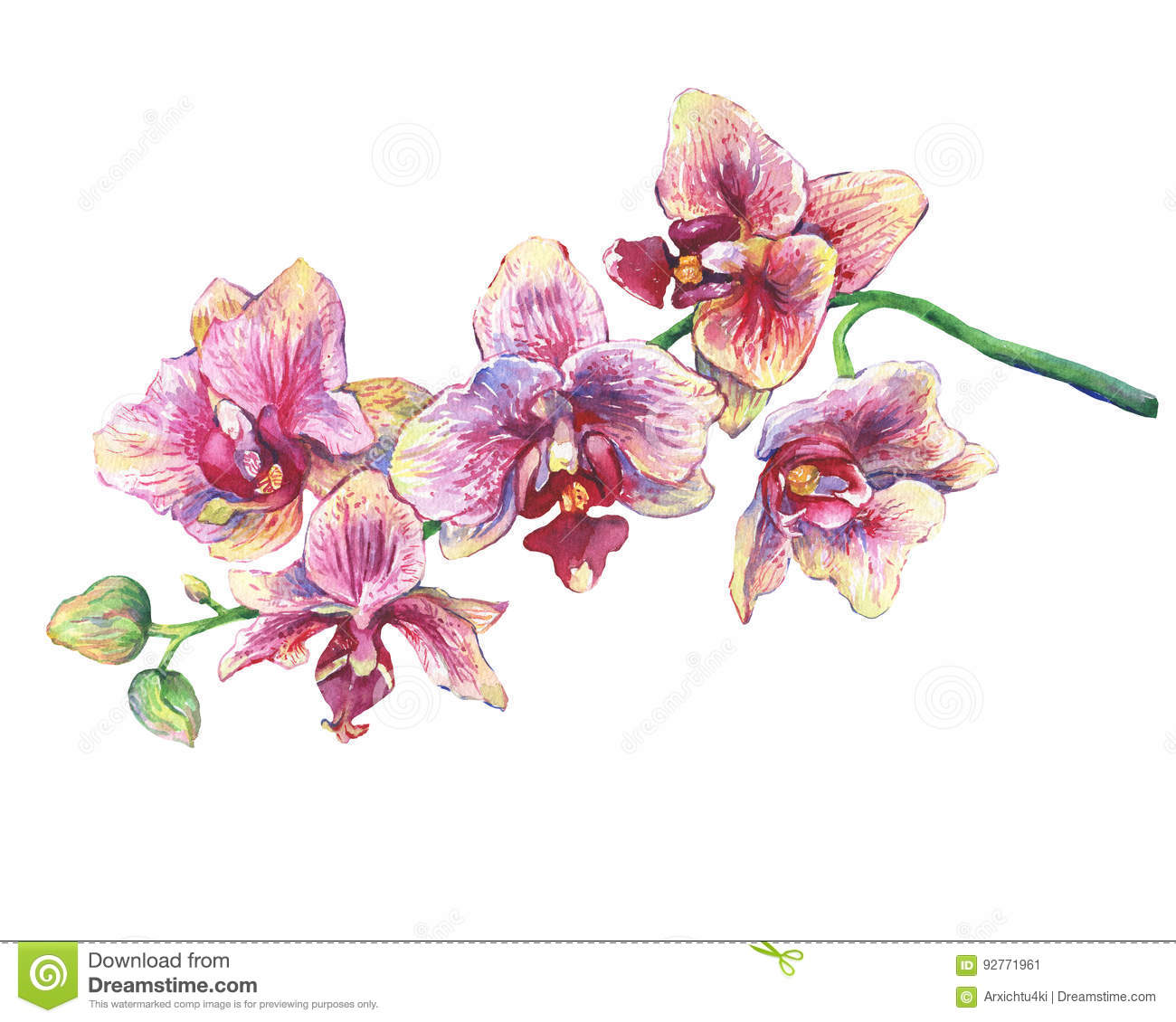 The Branch Of Blossoming Tropical Pink Flowers Orchids Close Up Phalaenopsis Orchis Stock