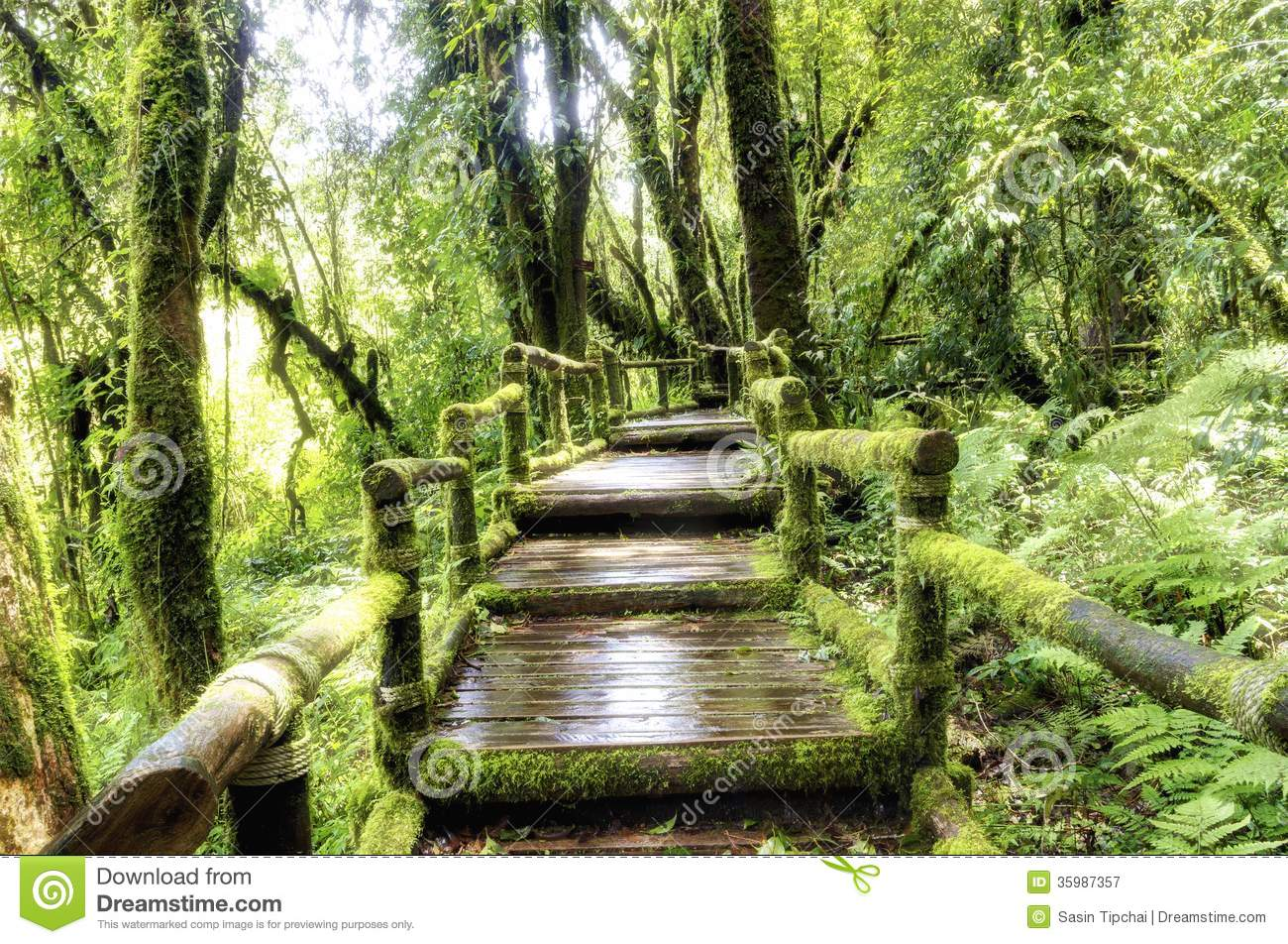 Bridge In To The Jungle Stock Image Image Of Wood Plant