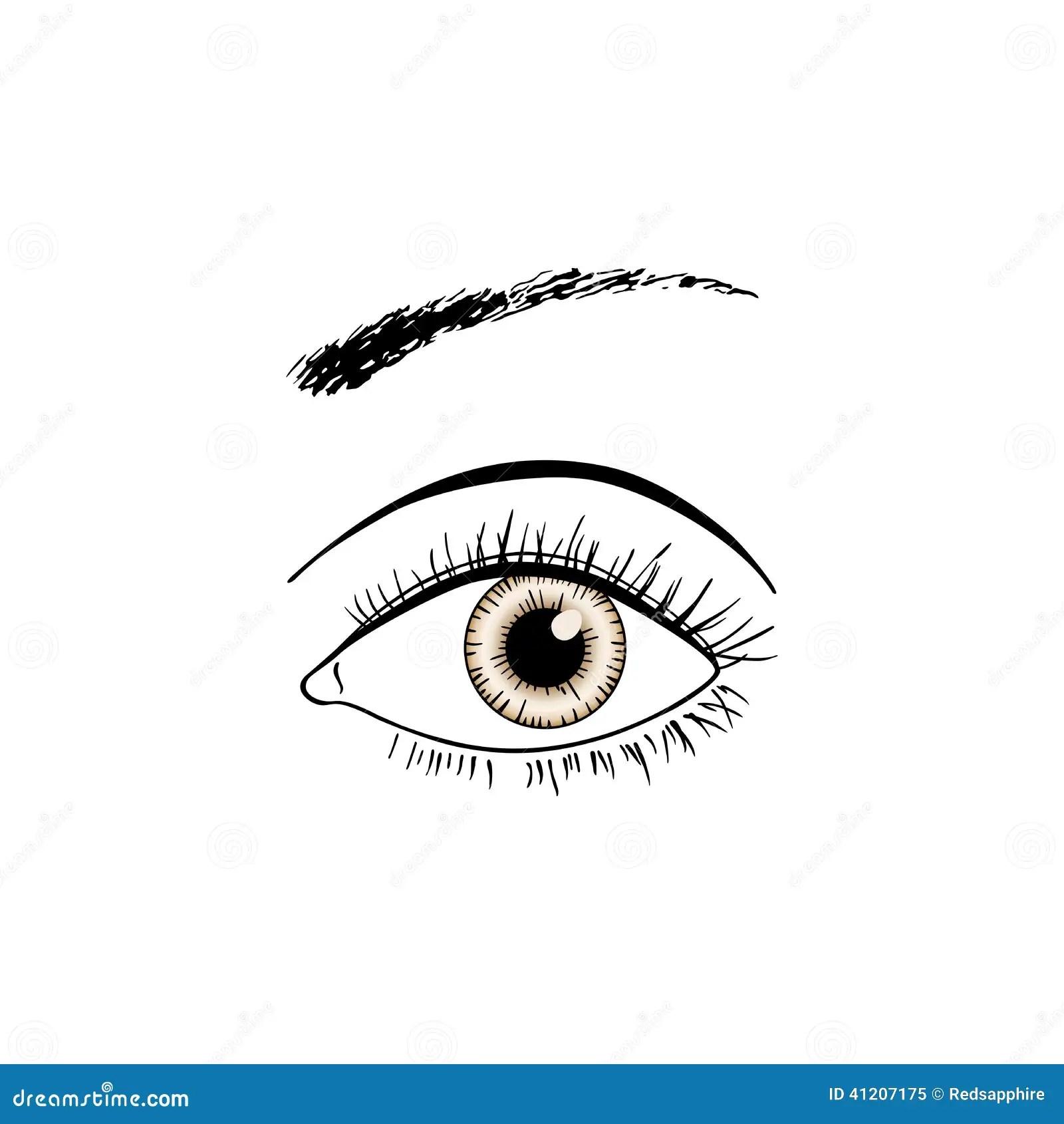 Brown Eye Line Art Stock Vector