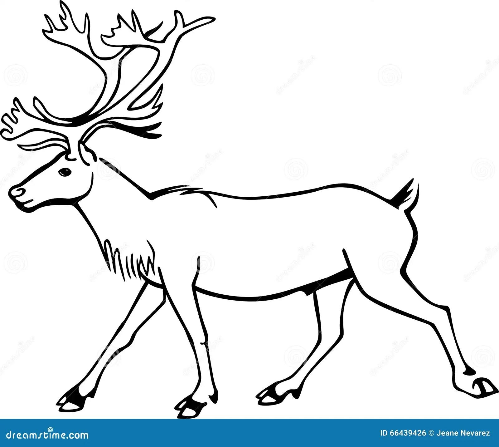 Bull Caribou Stock Vector Illustration Of Caribou