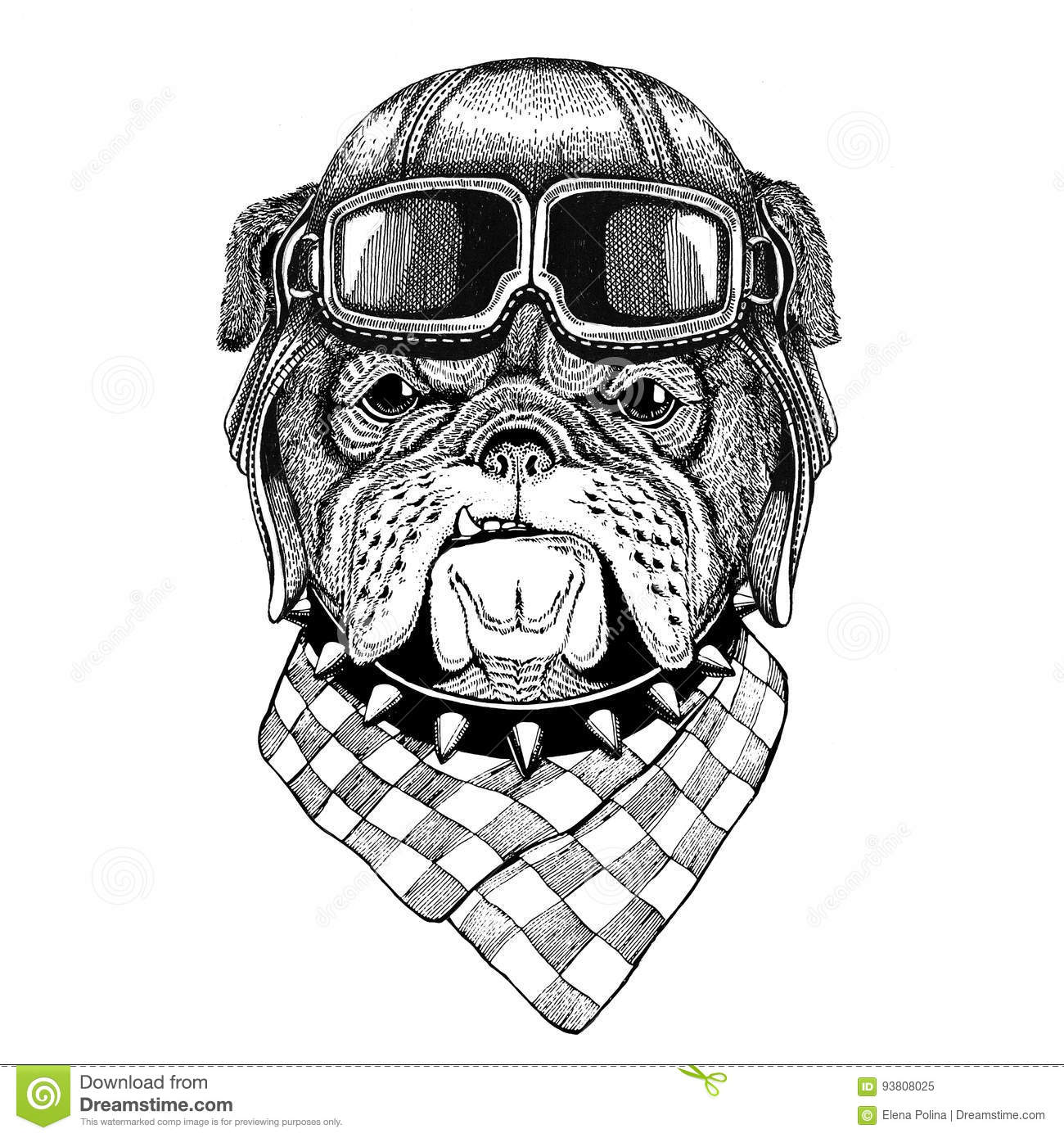 Bulldog Wearing Leather Helmet Aviator Biker Motorcycle