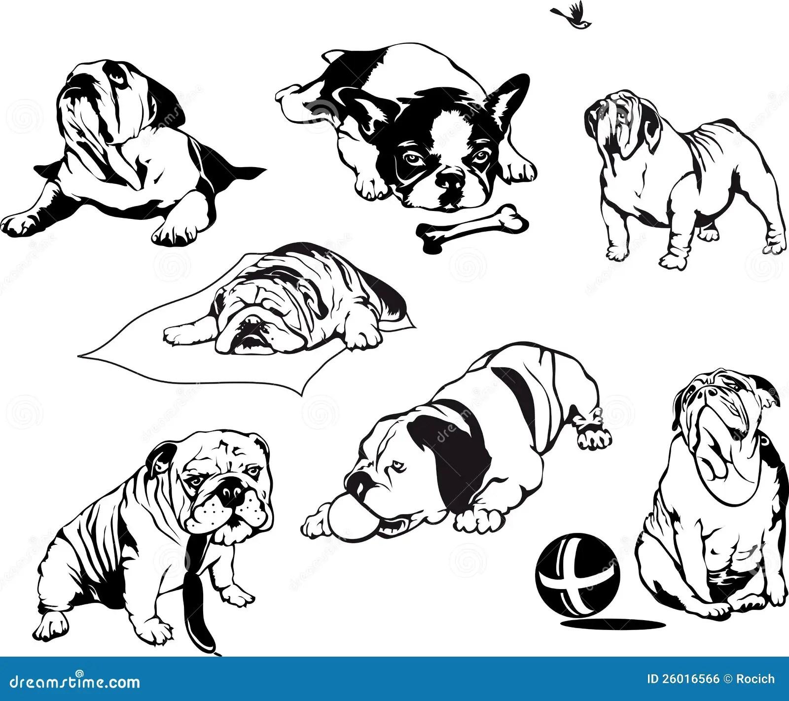 Bulldogs Royalty Free Stock Image