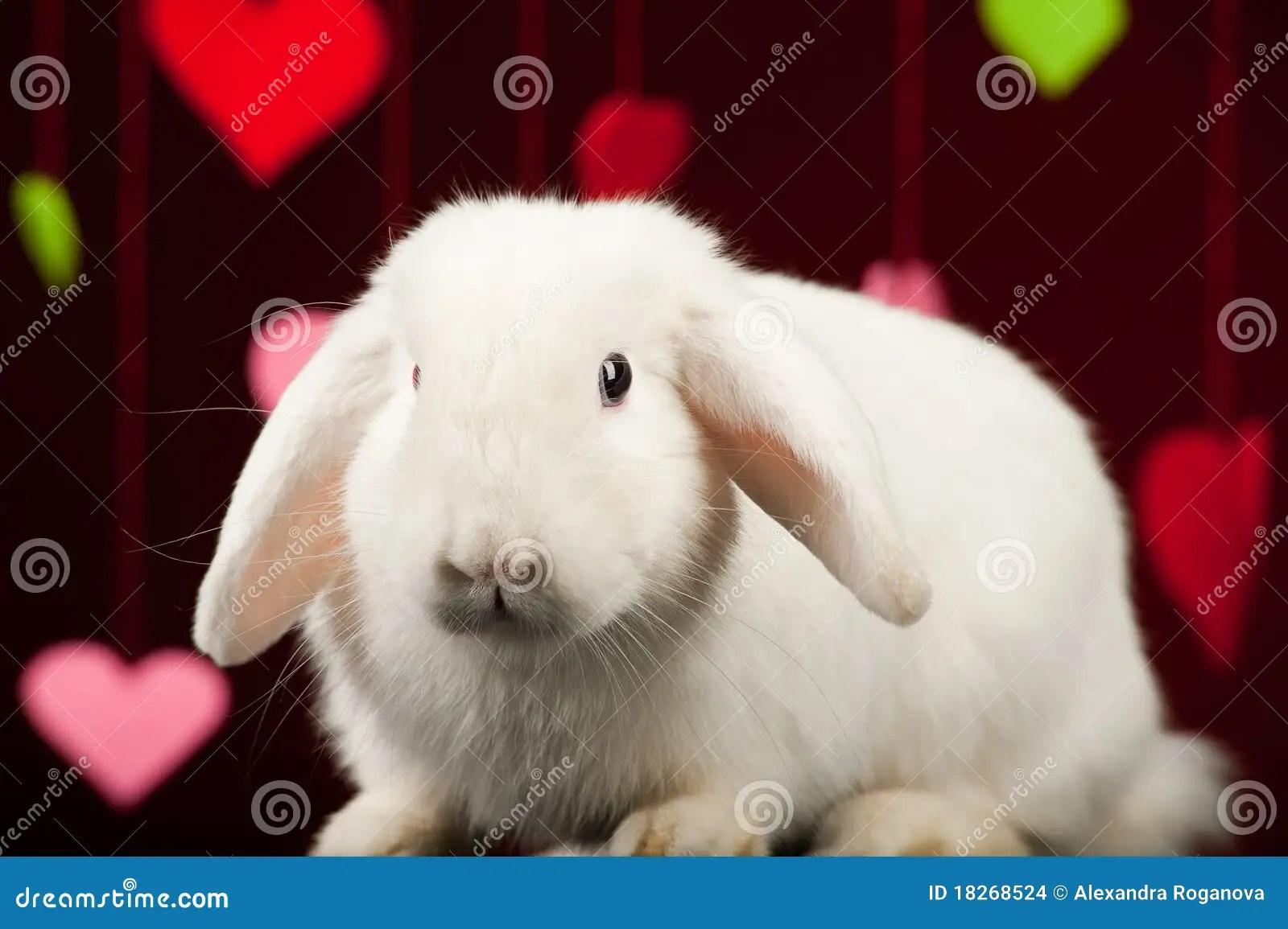 Bunny With Valentines Valentine Rabbit Stock Images