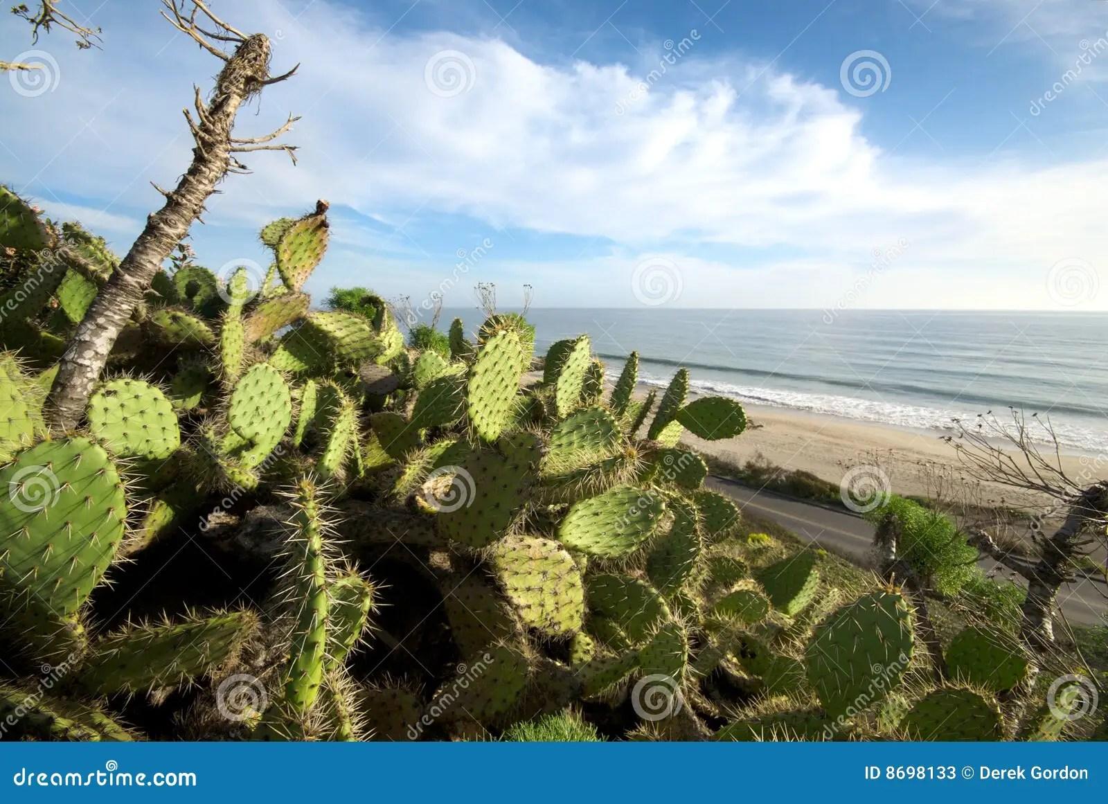 Cactus Plants Along California Beach Stock Photos Image