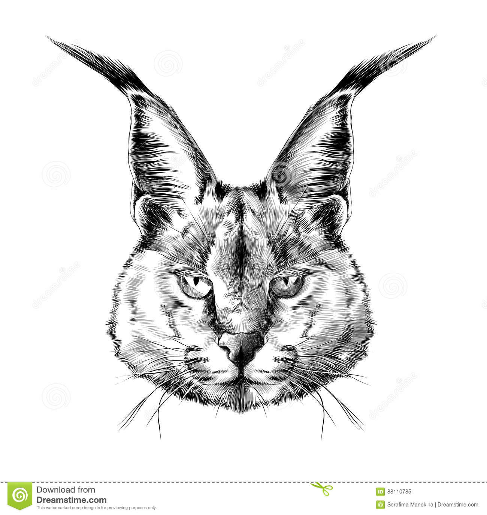 Bobcat Cartoons Illustrations Amp Vector Stock Images