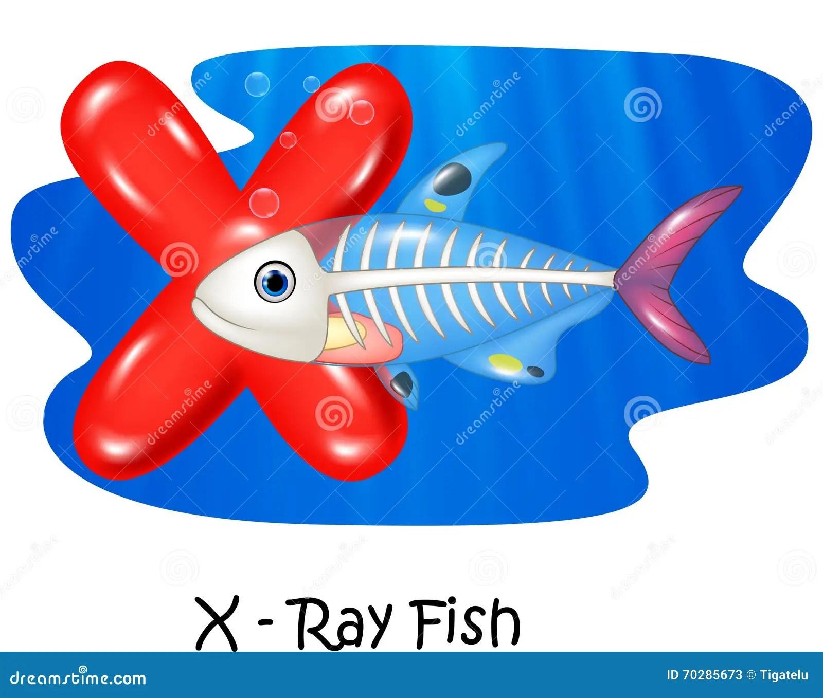 Cartoon Illustration X Of Letter X Ray Fish Stock Vector