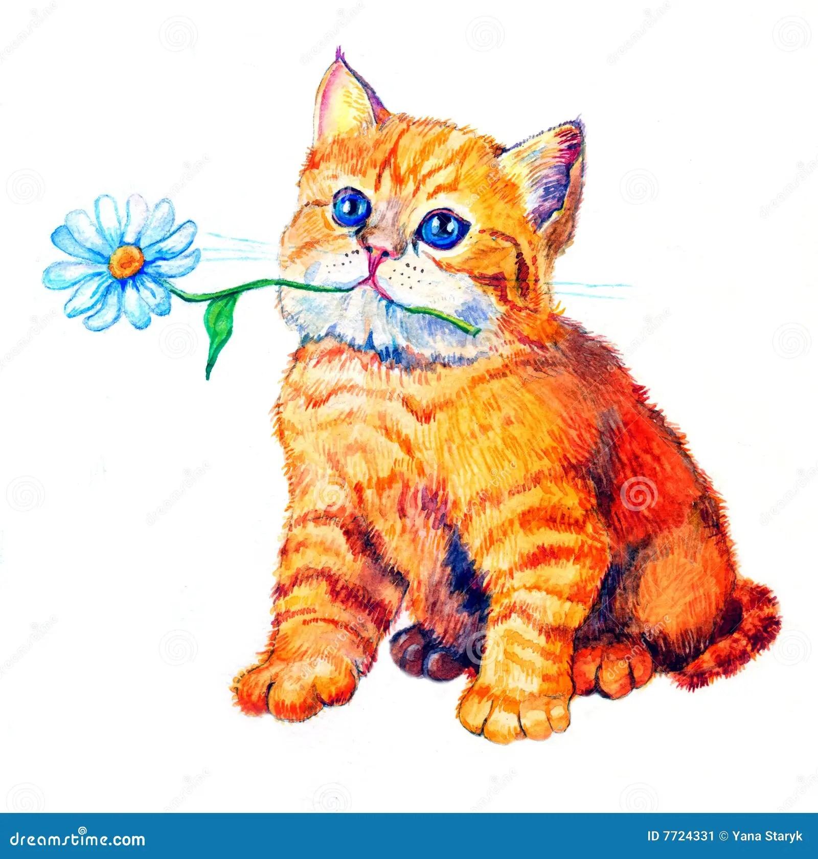 Cat Stock Image Image 7724331