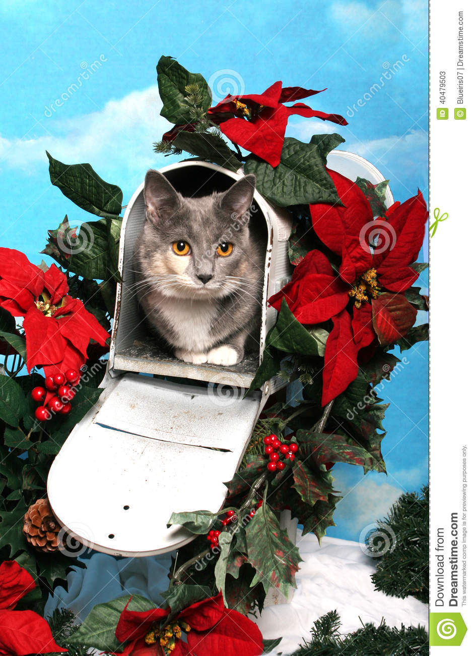 Cat In A Christmas Mailbox Stock Image Image Of