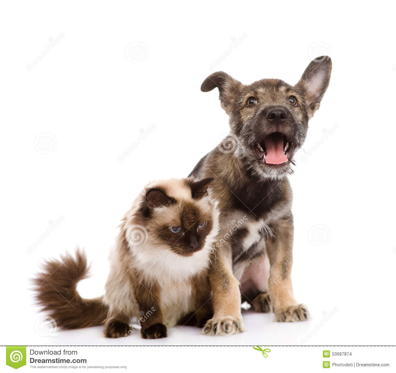 48 063 Cat Dog Photos Free Royalty Free Stock Photos From Dreamstime