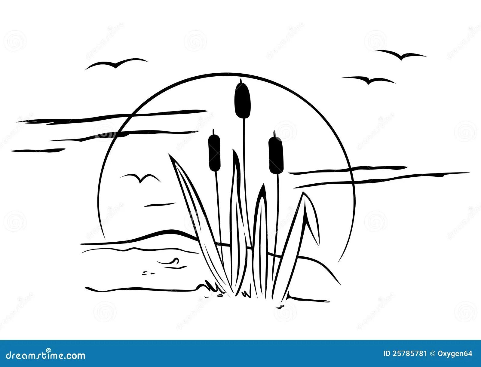 Cattails On Illustration Stock Vector Illustration Of