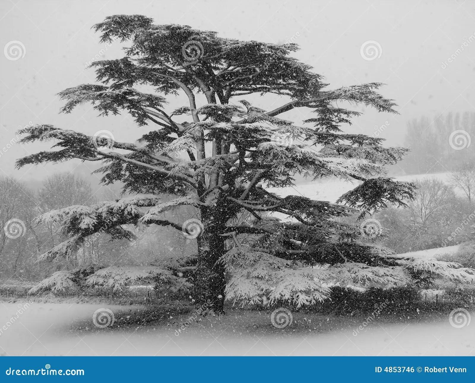 M And S Christmas Trees