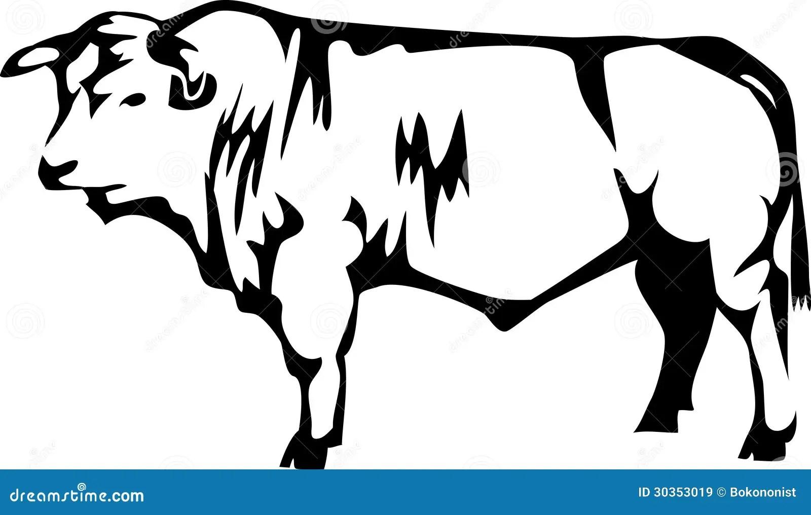 Charollais Stock Vector Illustration Of Livestock Cattle