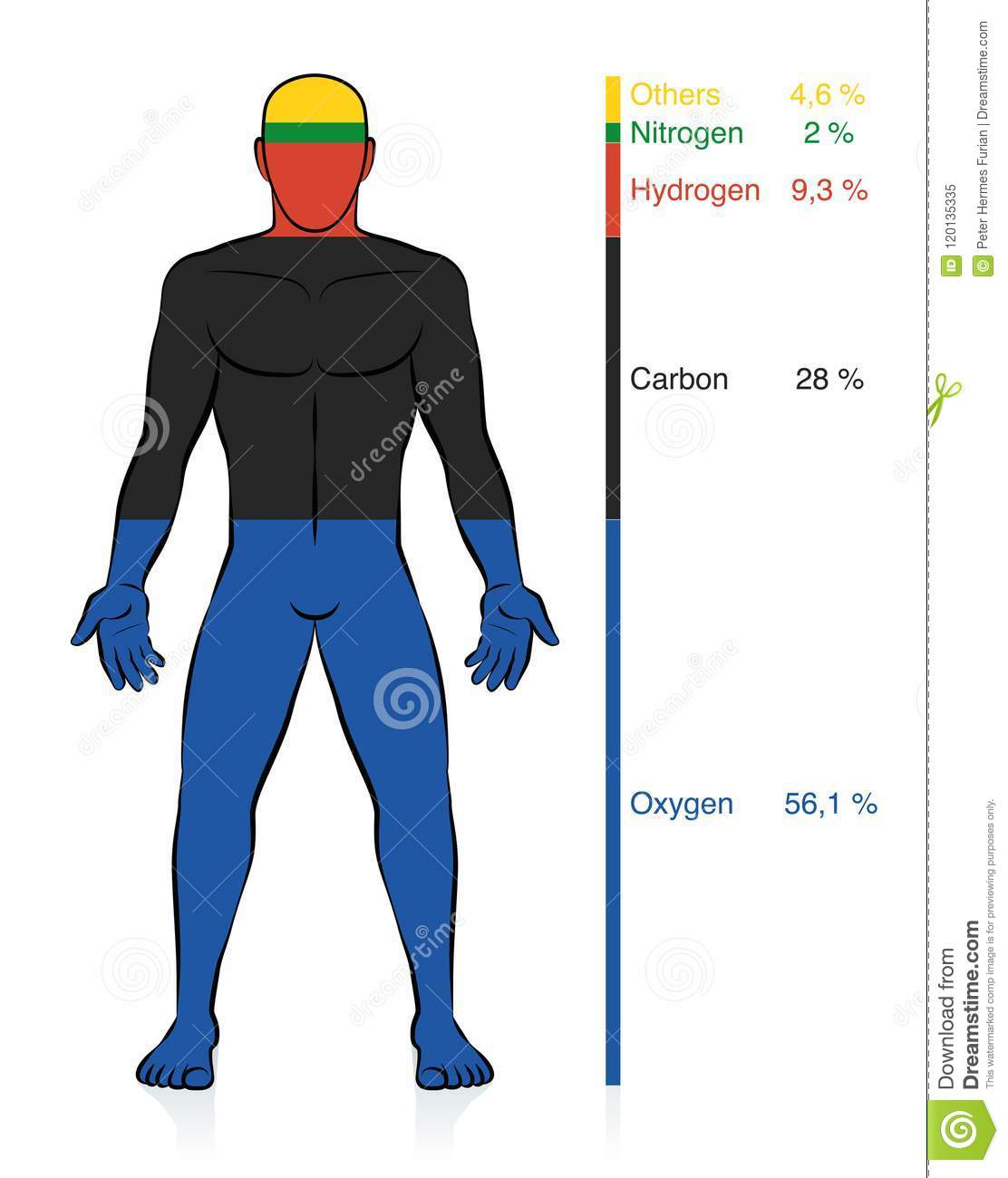 Chemical Composition Human Body Male Chemical Elements