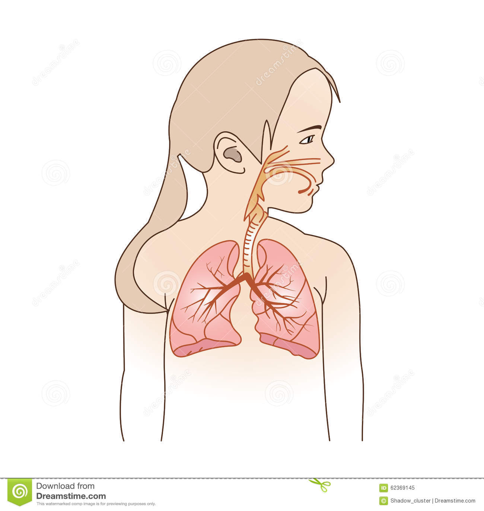 Child Respiratory Scheme Stock Vector Illustration Of