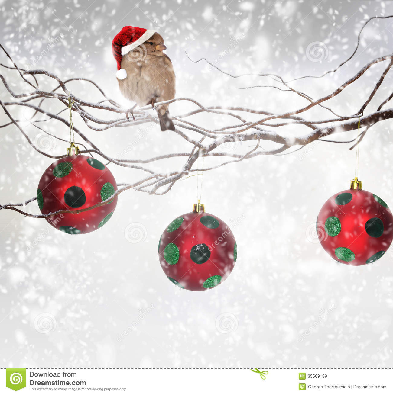 Christmas Balls And Sparrow Bird On Snowy Branch Royalty