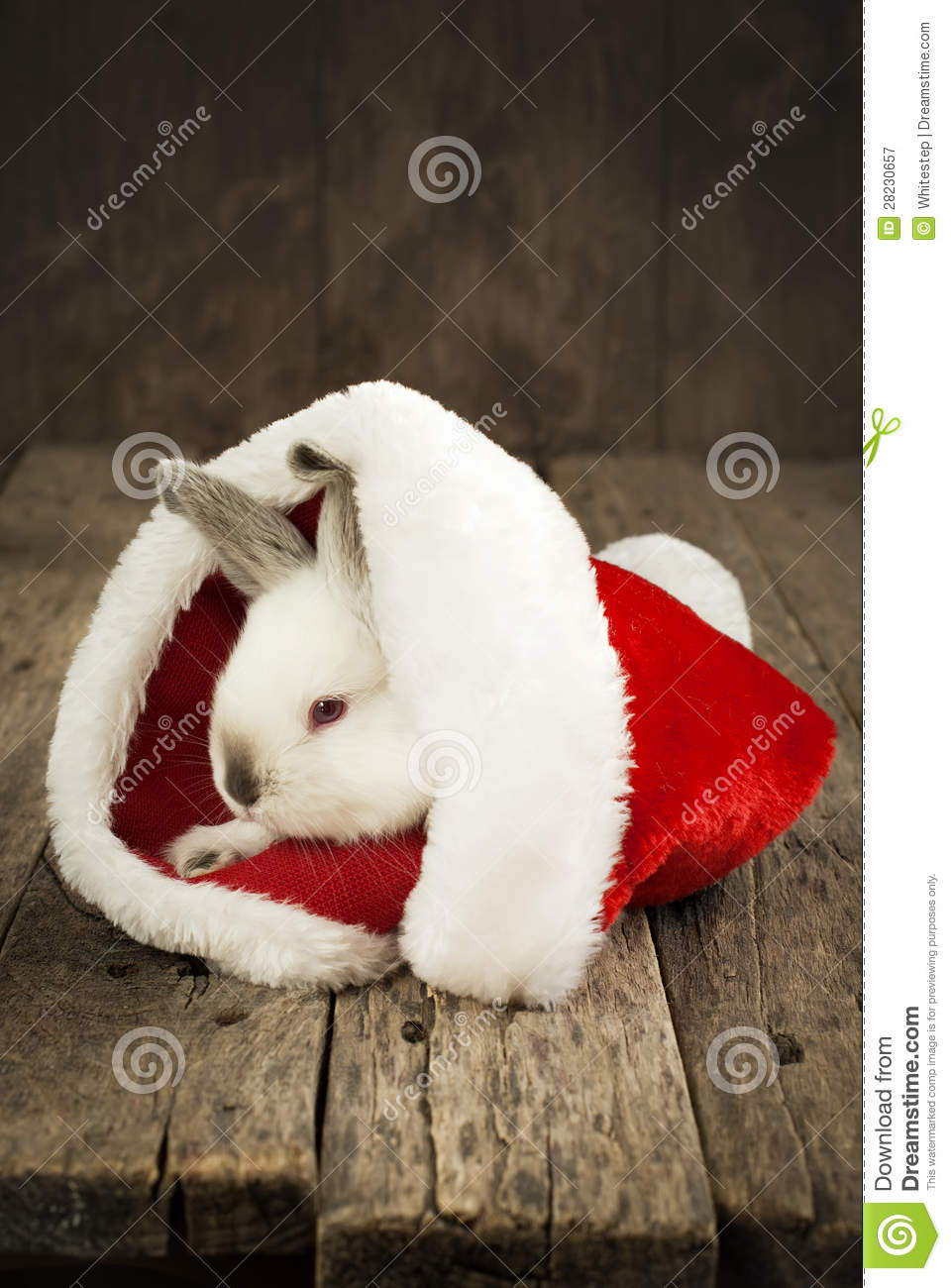 Christmas Card With White Rabbit On Wooden Background