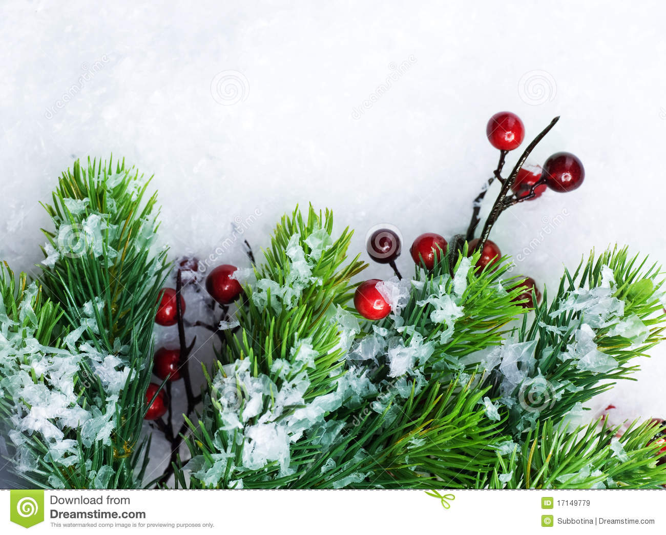 Christmas Evergreen Over Show Royalty Free Stock Images