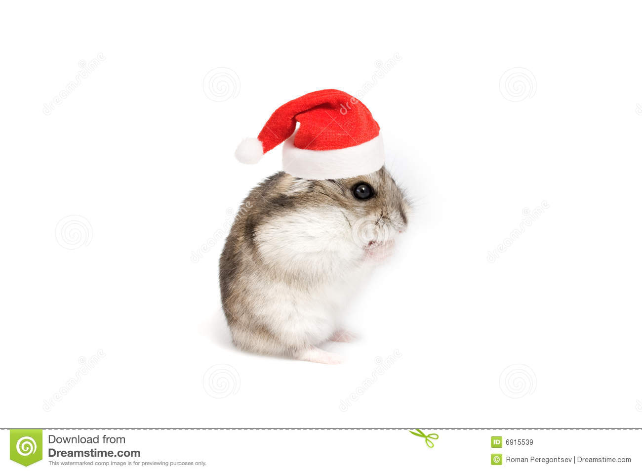 Christmas Hamster Royalty Free Stock Images Image 6915539