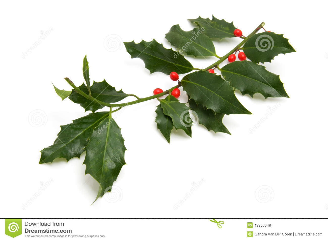 Christmas Holly Branch Royalty Free Stock Photos Image