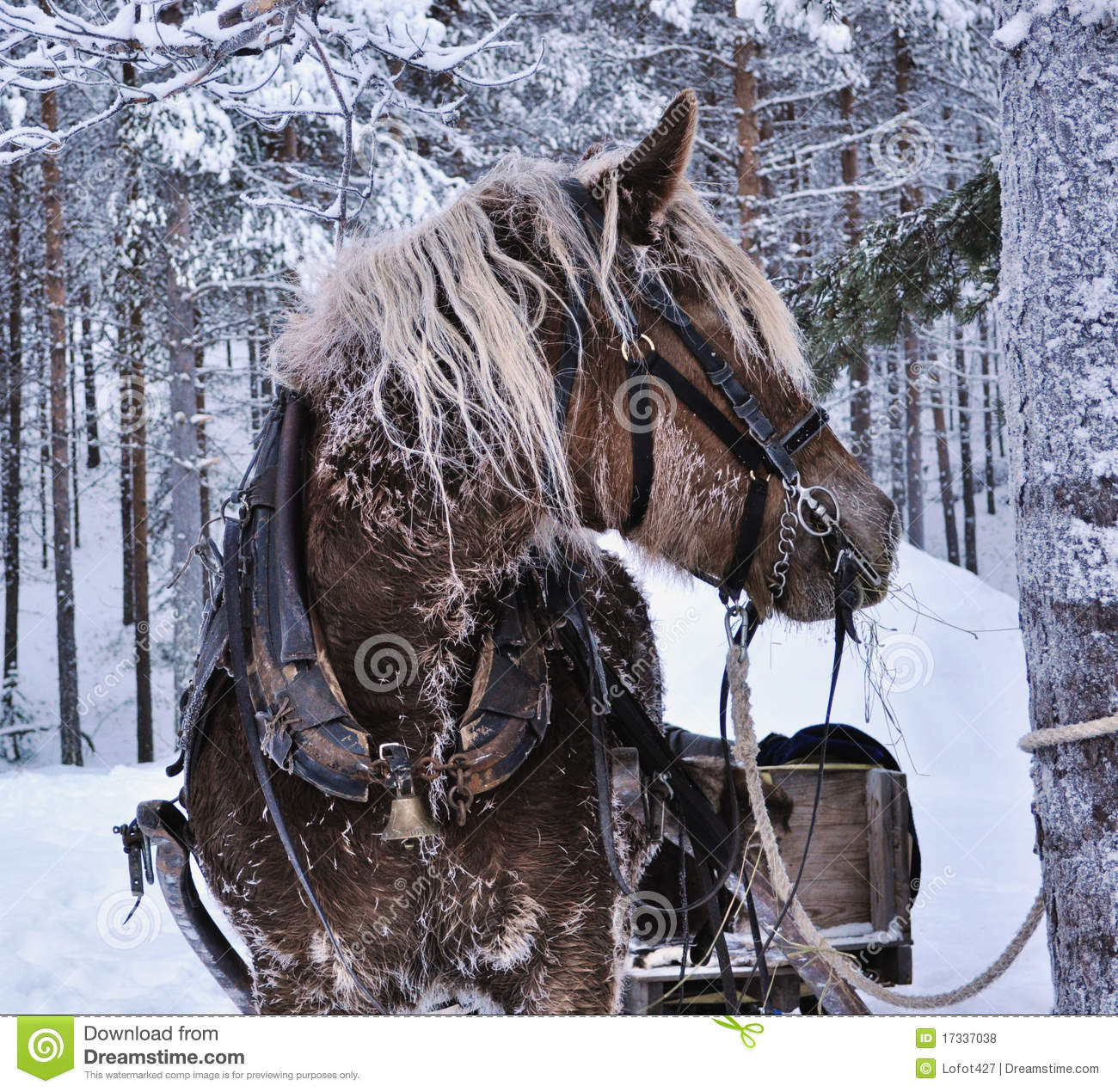 Christmas Horse Royalty Free Stock Photos Image 17337038