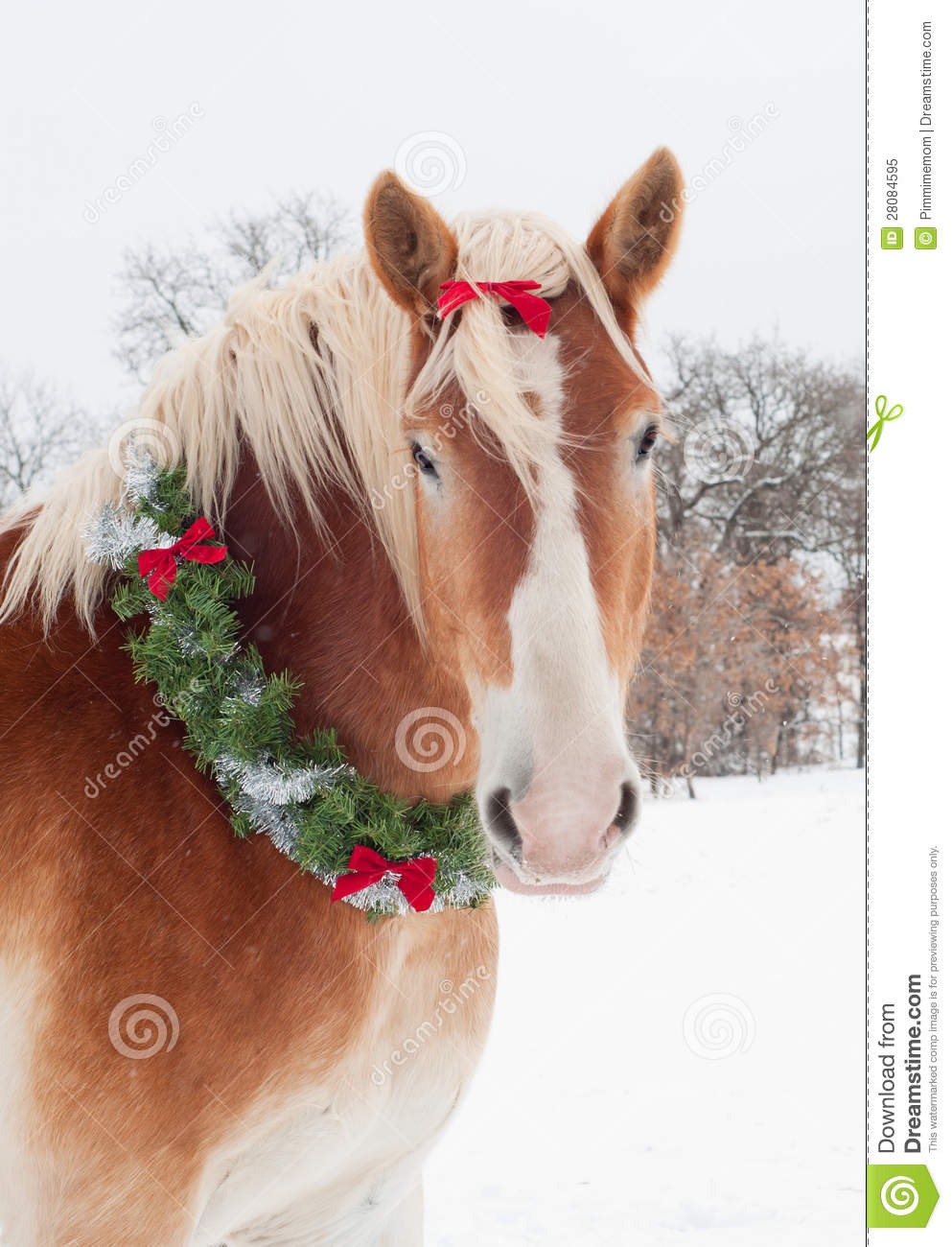 Christmas Horse A Belgian Draft With Wreath Royalty Free