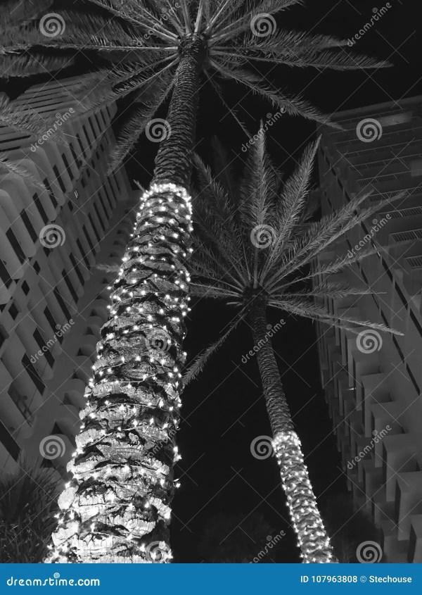 christmas lights miami # 61