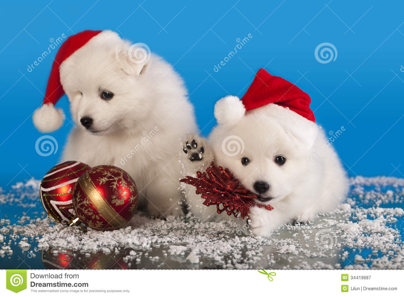 Christmas Puppies Stock Image Image Of Indoors Furry