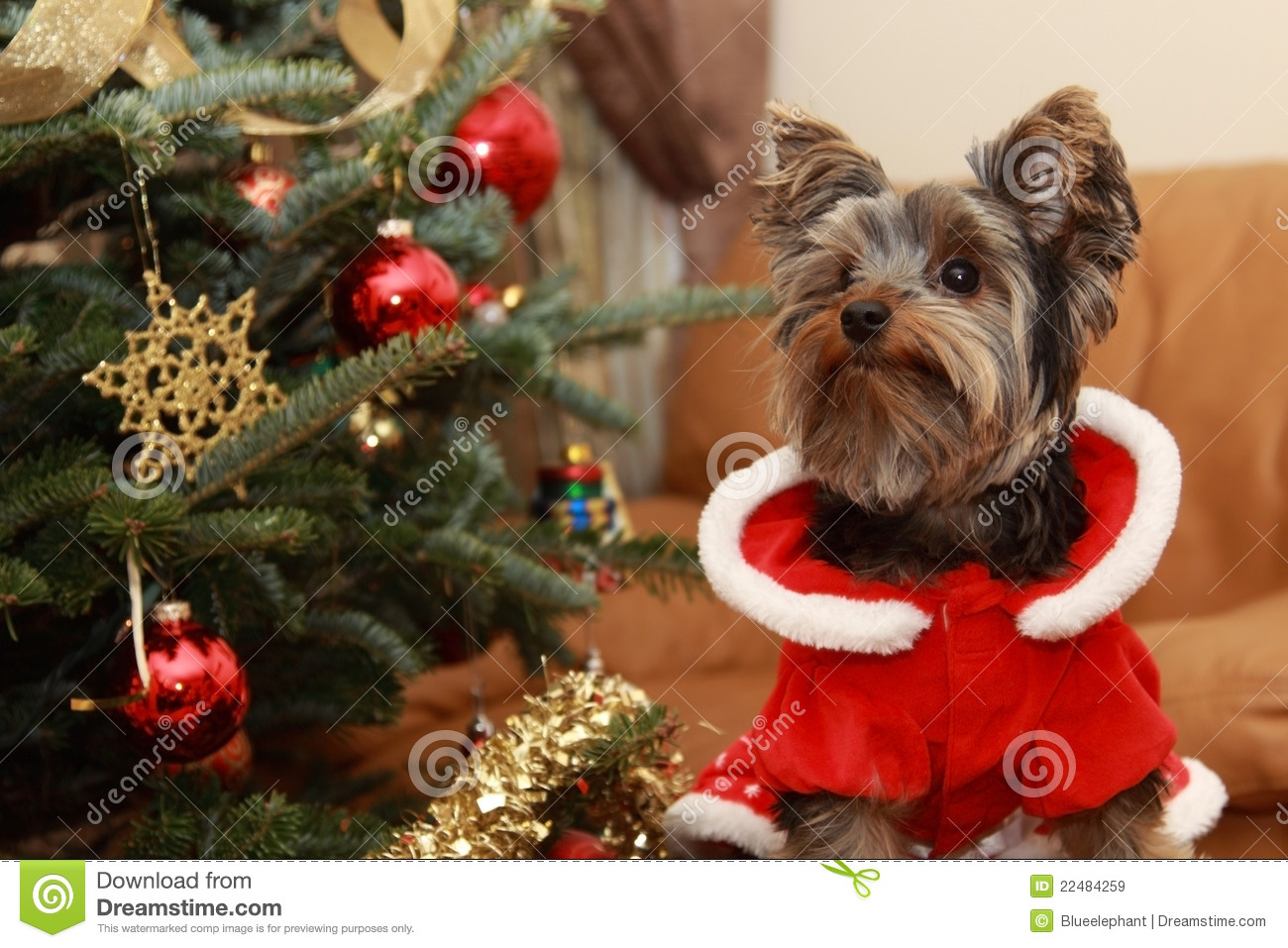 Christmas Tree And Yorkie Puppy Stock Image Image Of