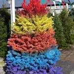 Rainbow Christmas Tree Stock Photo Image Of Mock Christmas 167305784