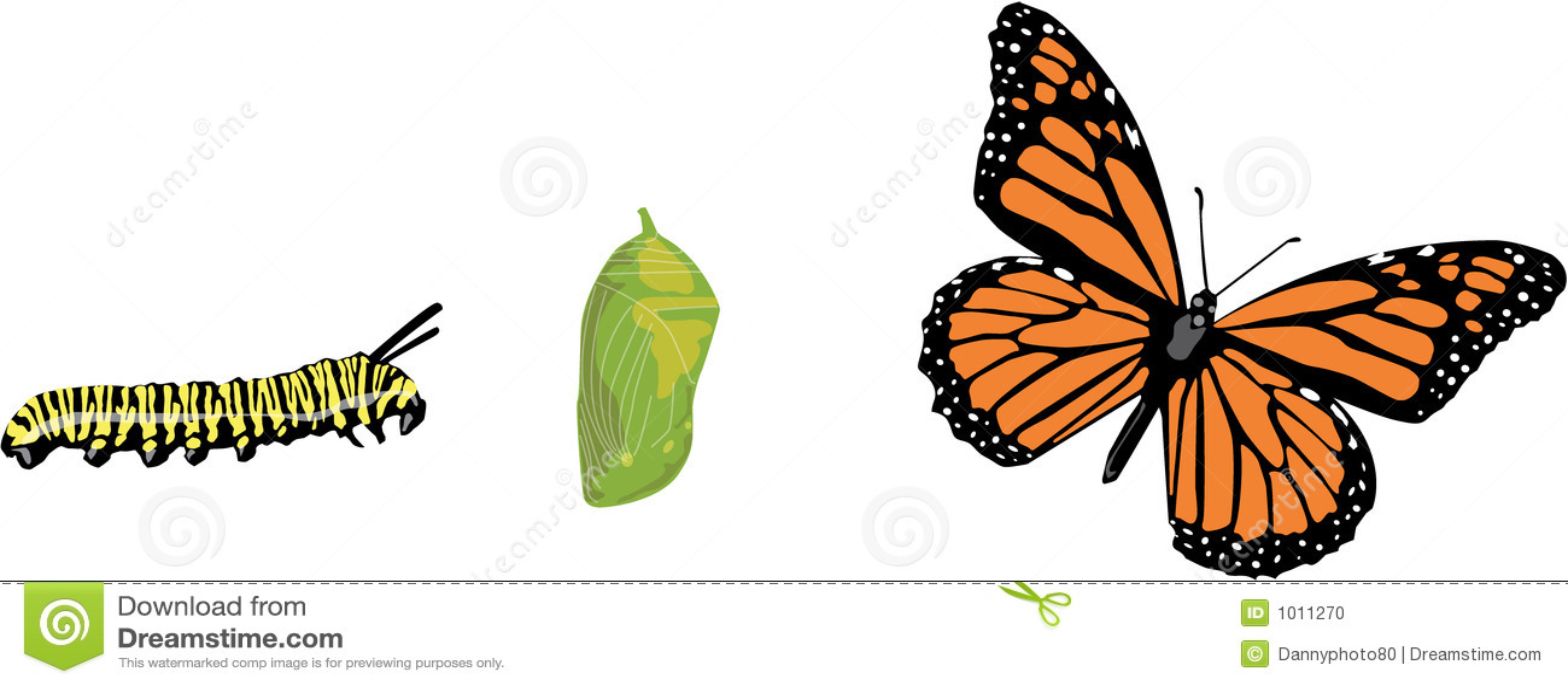 https://i1.wp.com/thumbs.dreamstime.com/z/ciclo-vital-de-la-mariposa-1011270.jpg