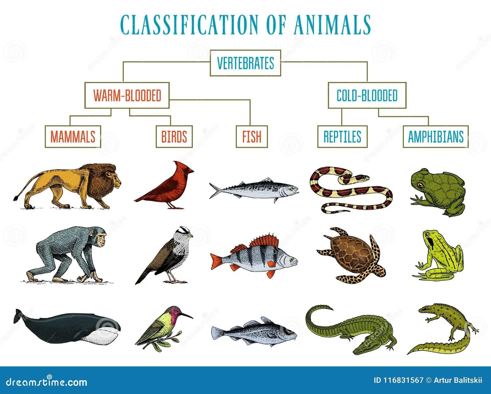 Animal Kingdom Preschool Worksheet