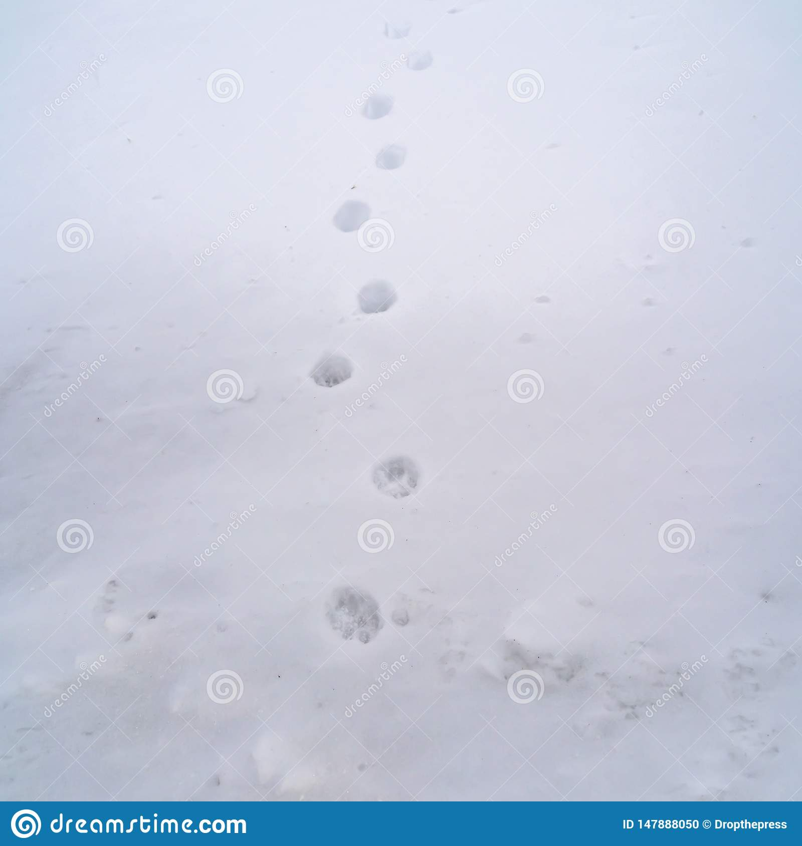 Clear Square Animal Tracks Creating A Pattern On Frosty