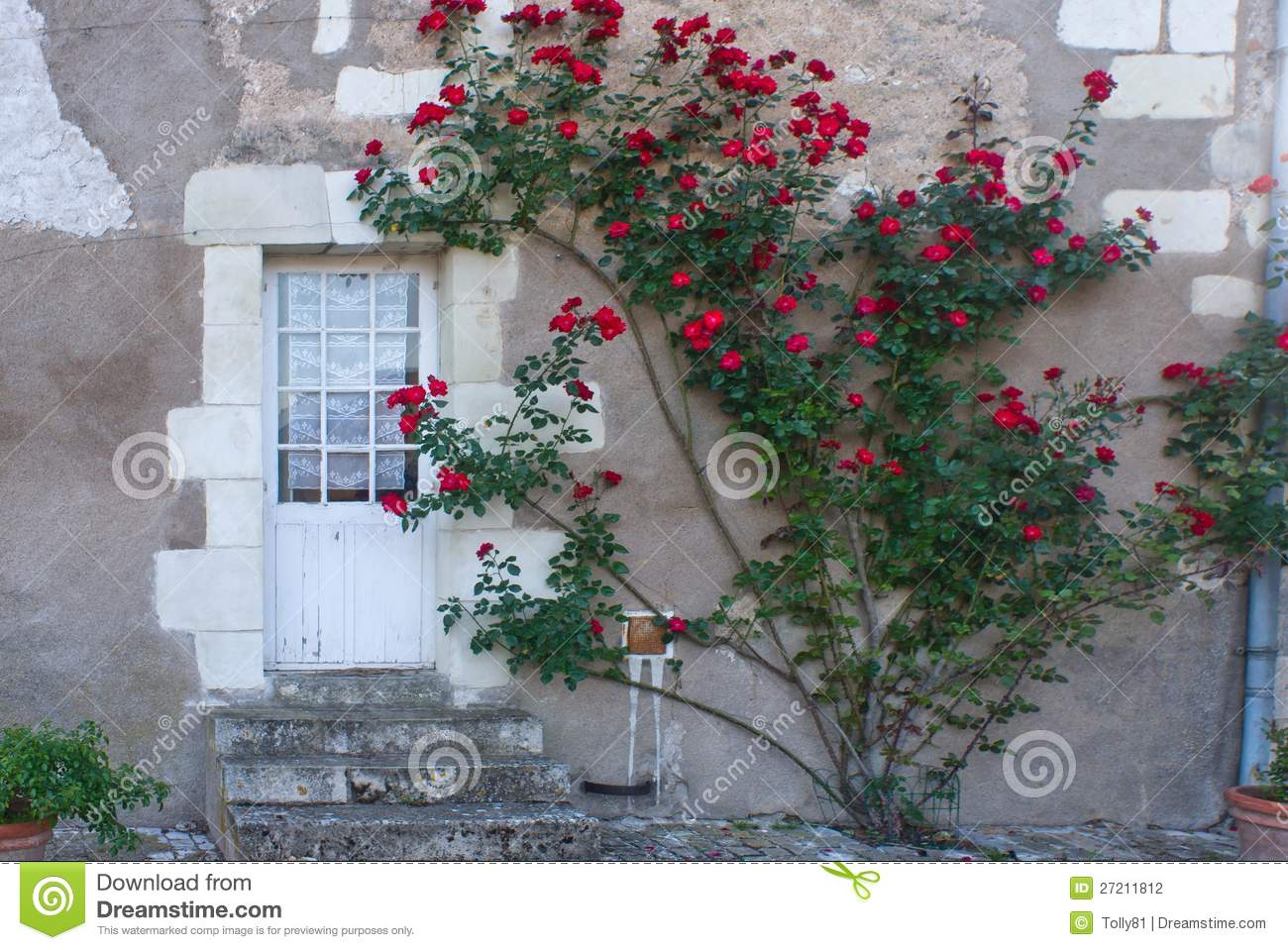 Climbing Rose Bush In France Stock Photo Image Of