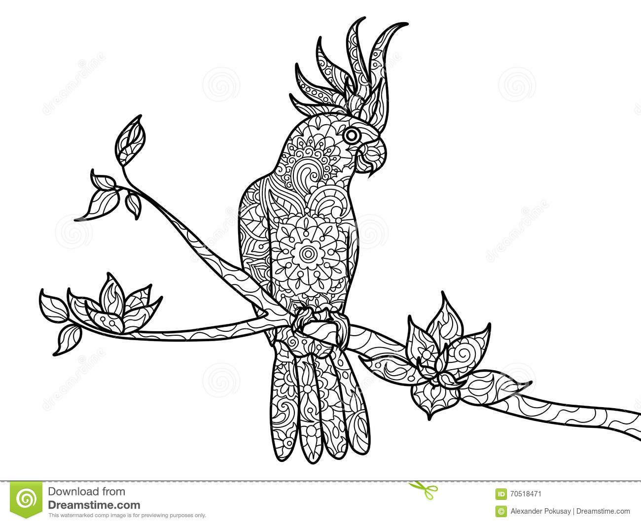 Cockatoo Parrot Coloring Book For Adults Vector Stock