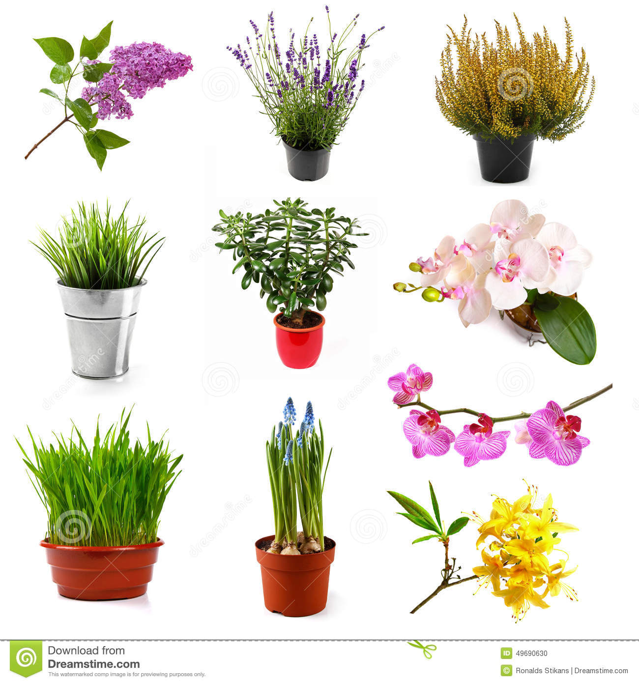 Collection With Different Flowers And Plants Isolated On