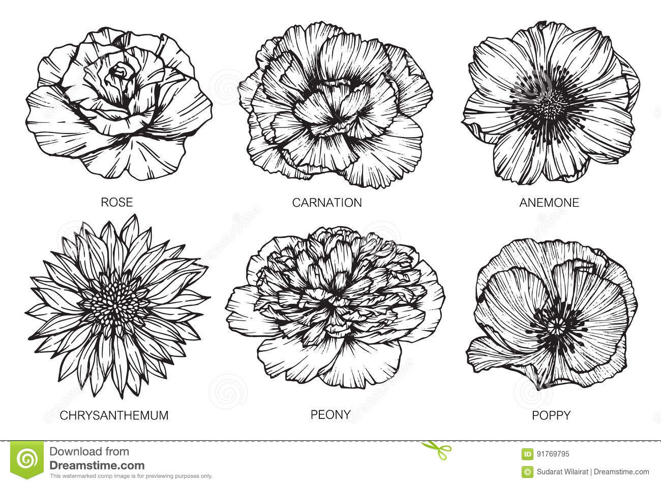Collection Of Flowers Drawing And Sketch With Line Art On