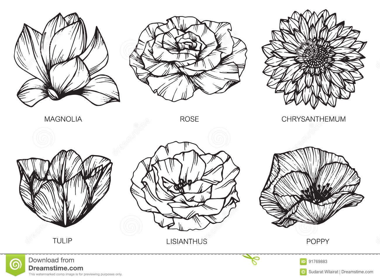 Collection Of Flowers Drawing And Sketch With Line Art