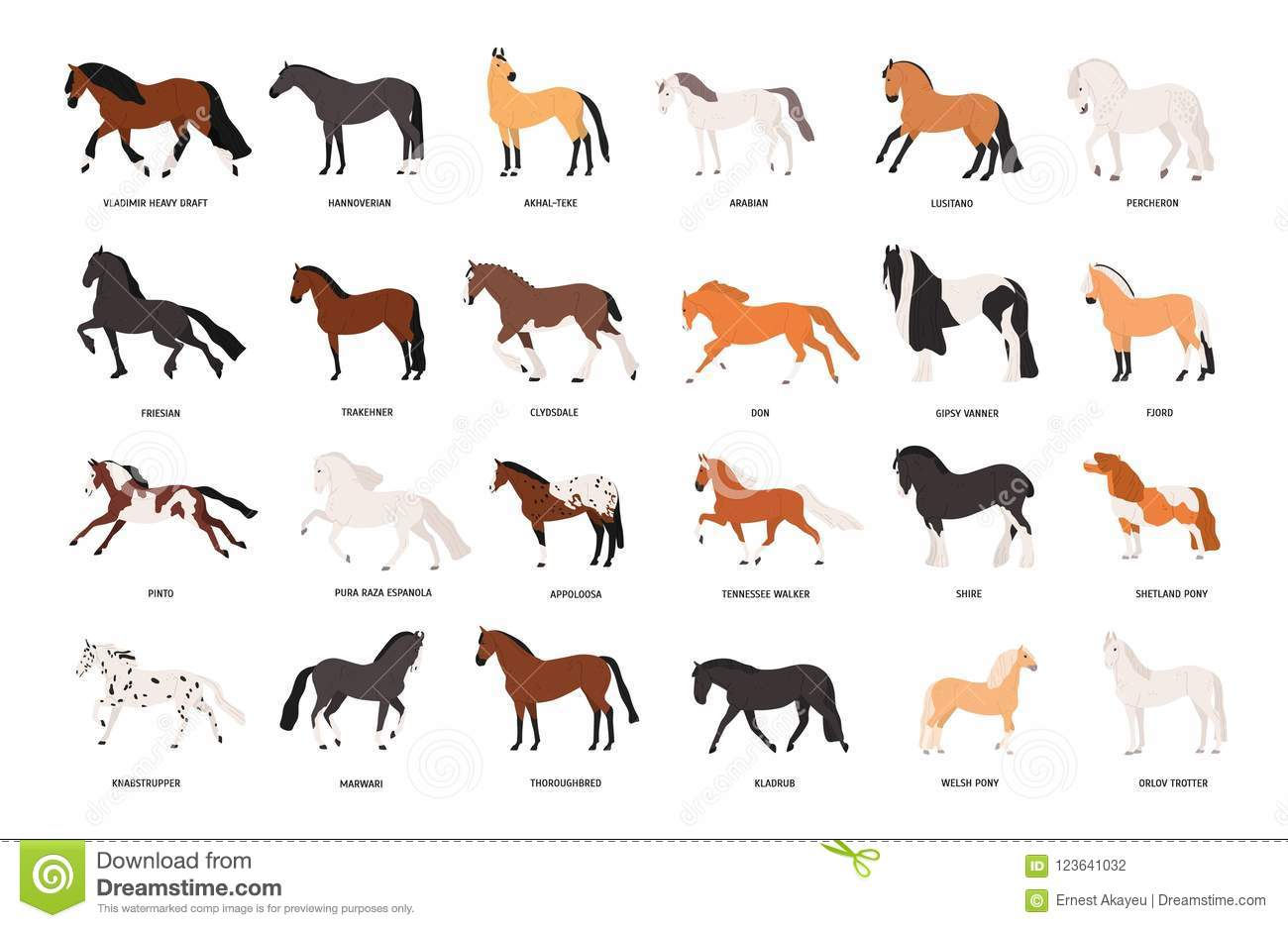Collection Of Horses Of Various Breeds Isolated On White