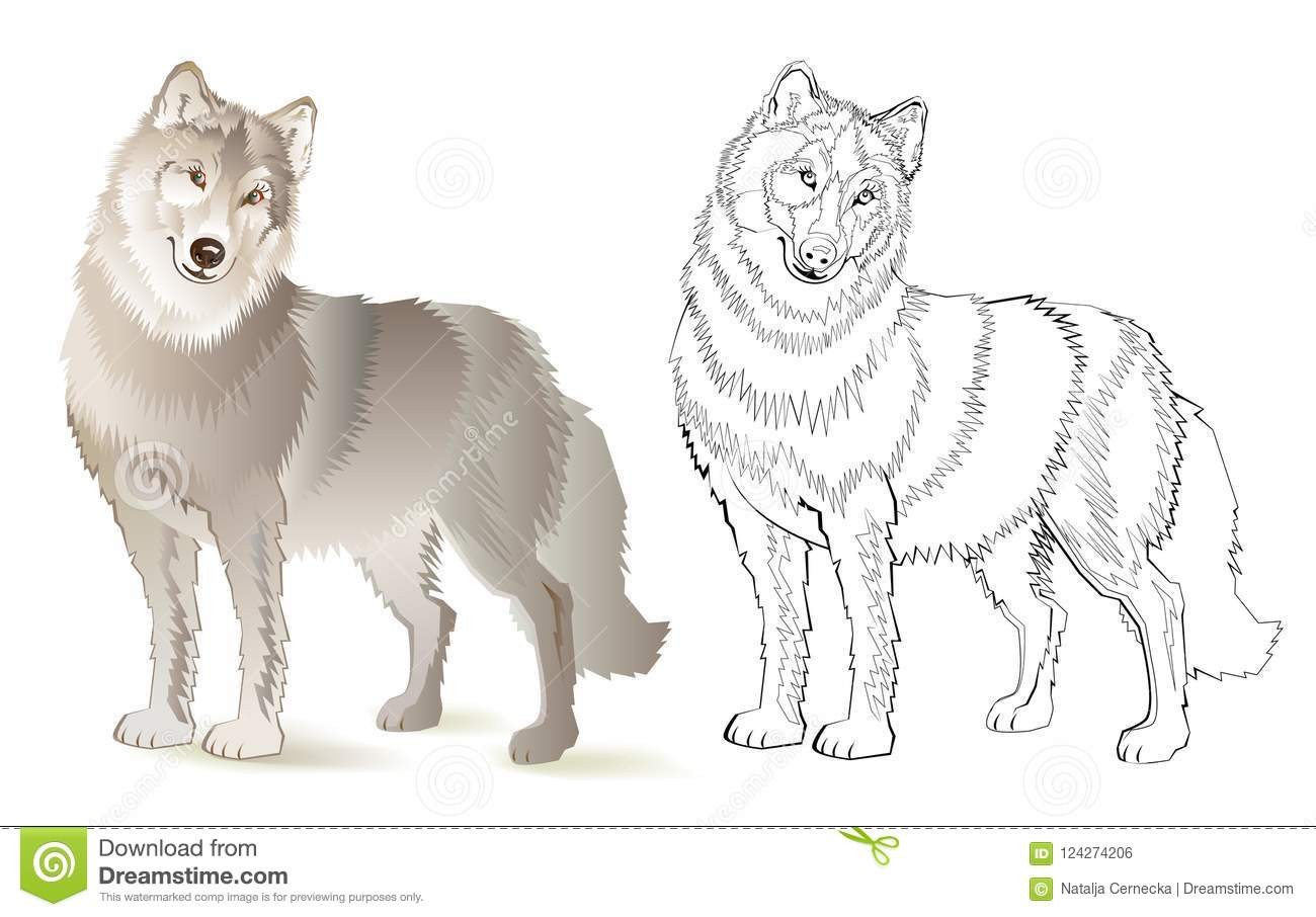 Wolf Coloring Vector For Adults Vector Illustration