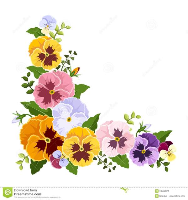 Colorful Pansy Flowers Corner Vector Illustration Stock