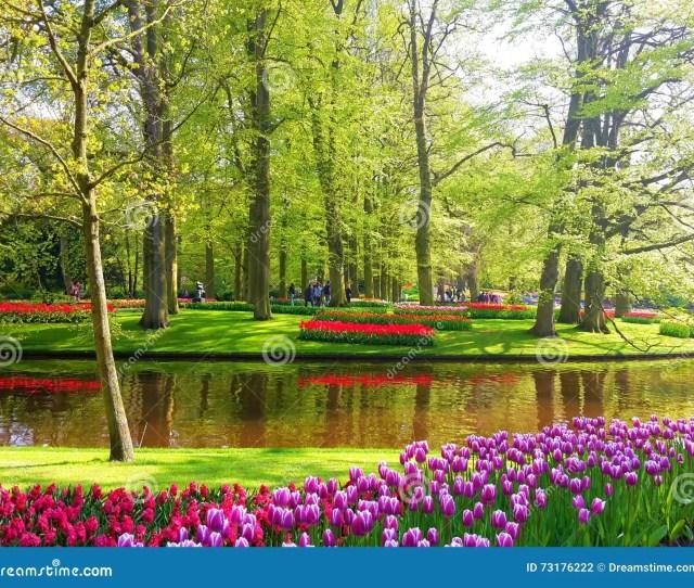 Colorful Tulips In Keukenhof The Garden Of Europe The Netherlands Europe