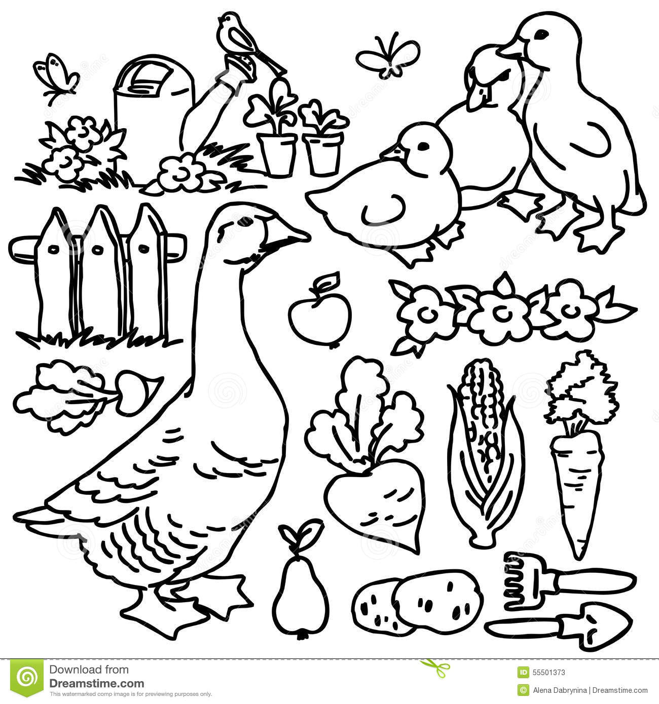 Coloring Book Cartoon Farm Goose And Animals Stock