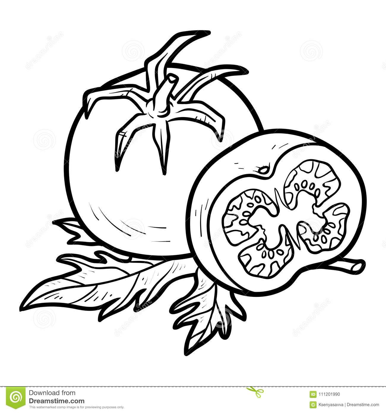 Coloring Book Tomato Stock Vector Illustration Of Food
