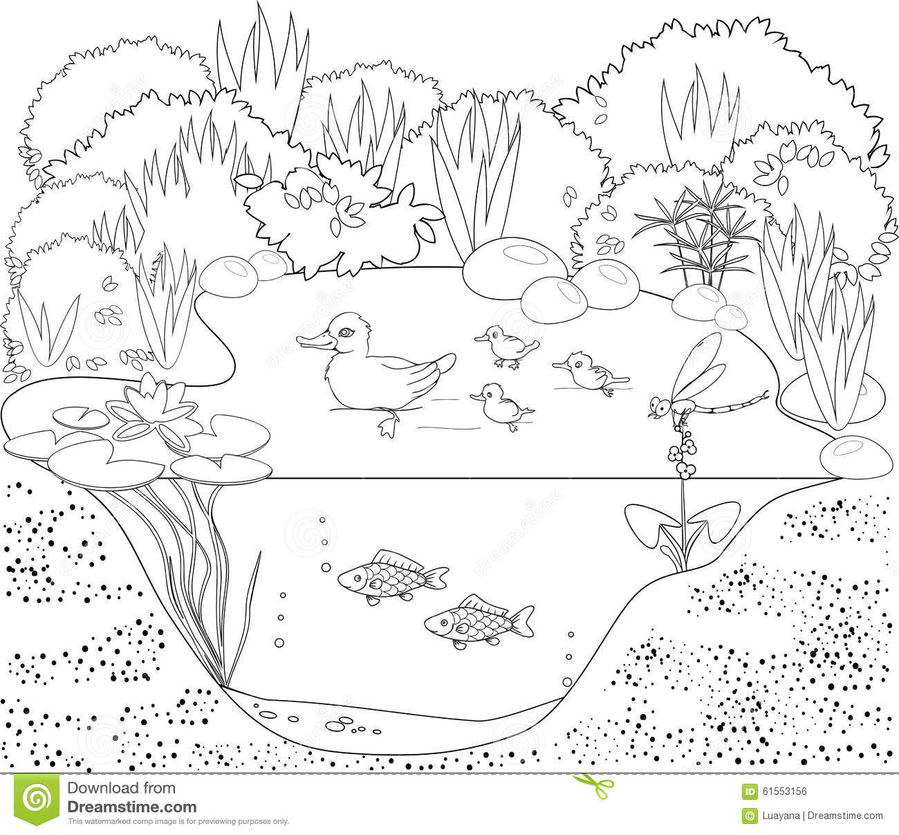 Coloring Duck Pond Stock Vector