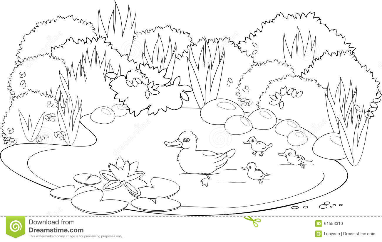Coloring Duck Pond Stock Vector Illustration Of Artwork