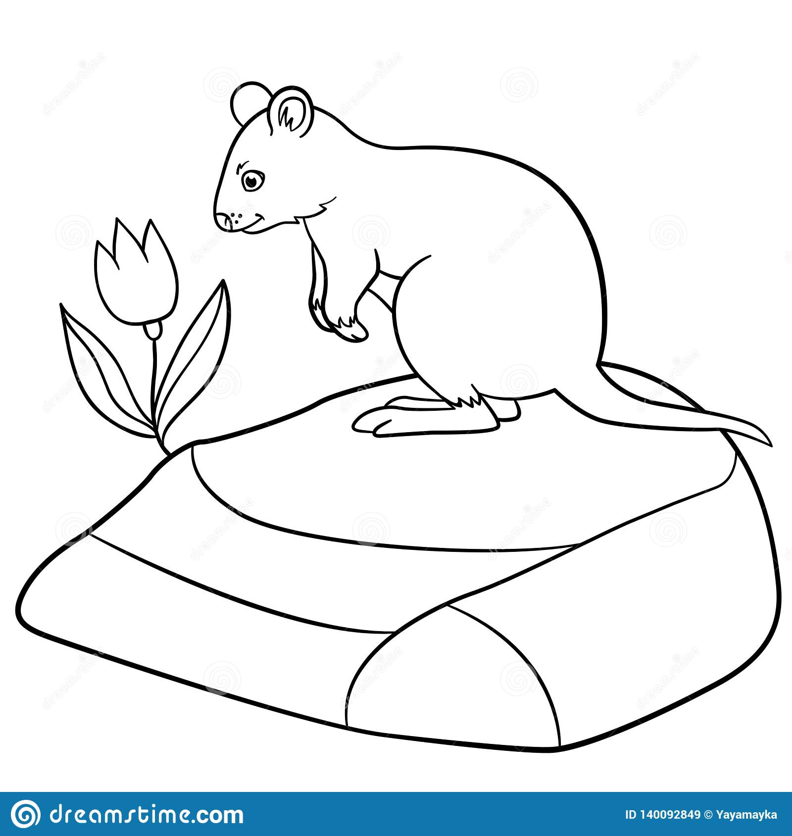 Coloring Pages Little Cute Quokka Stands On The Stone
