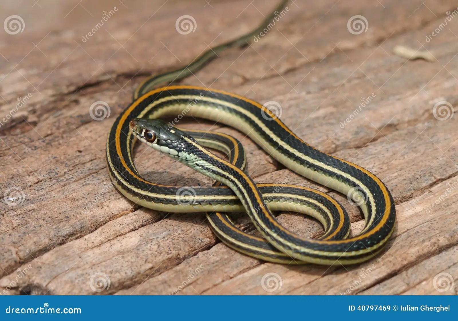 4 Poisonous Snakes Illinois