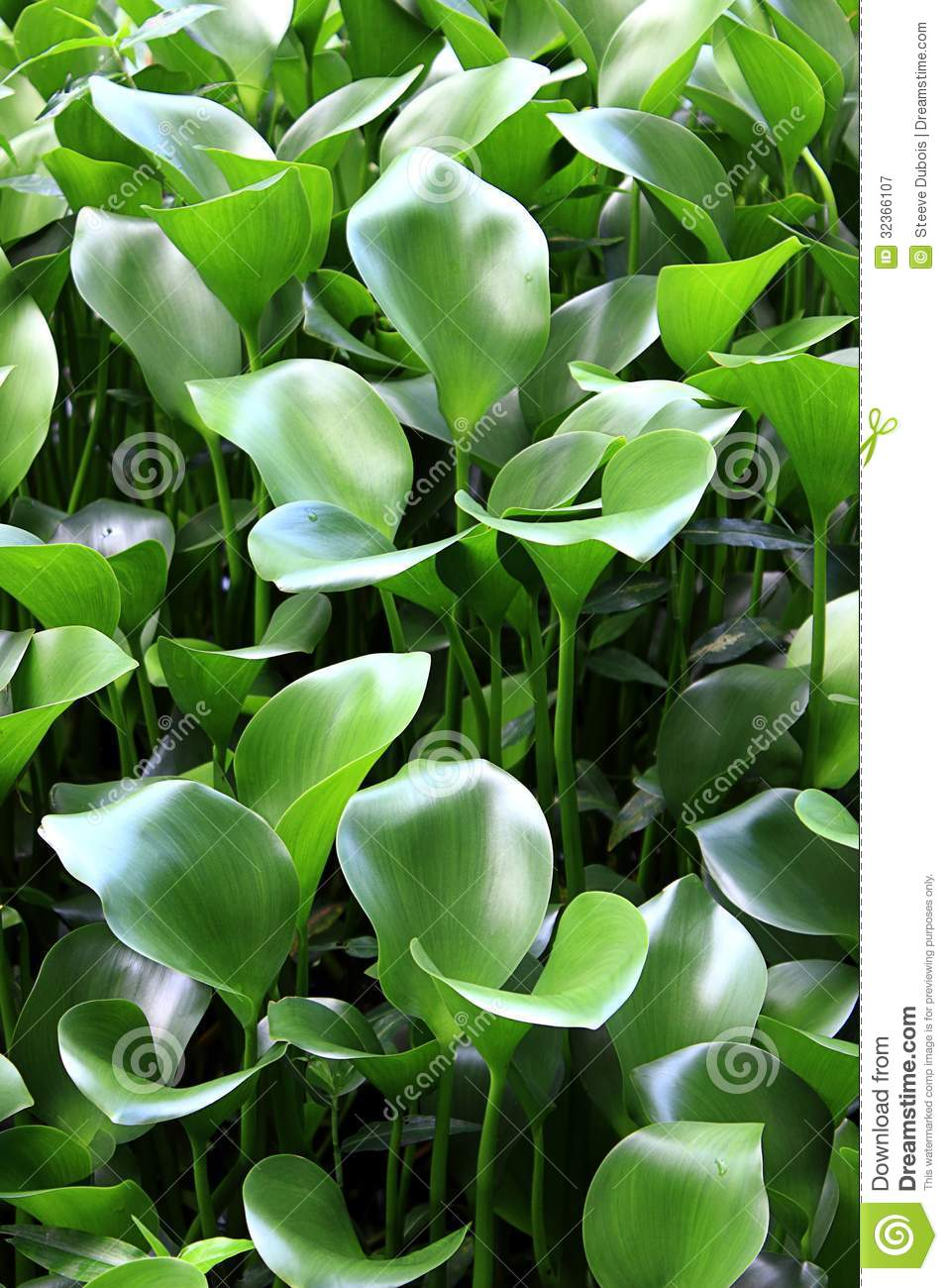 Name Some Water Plants