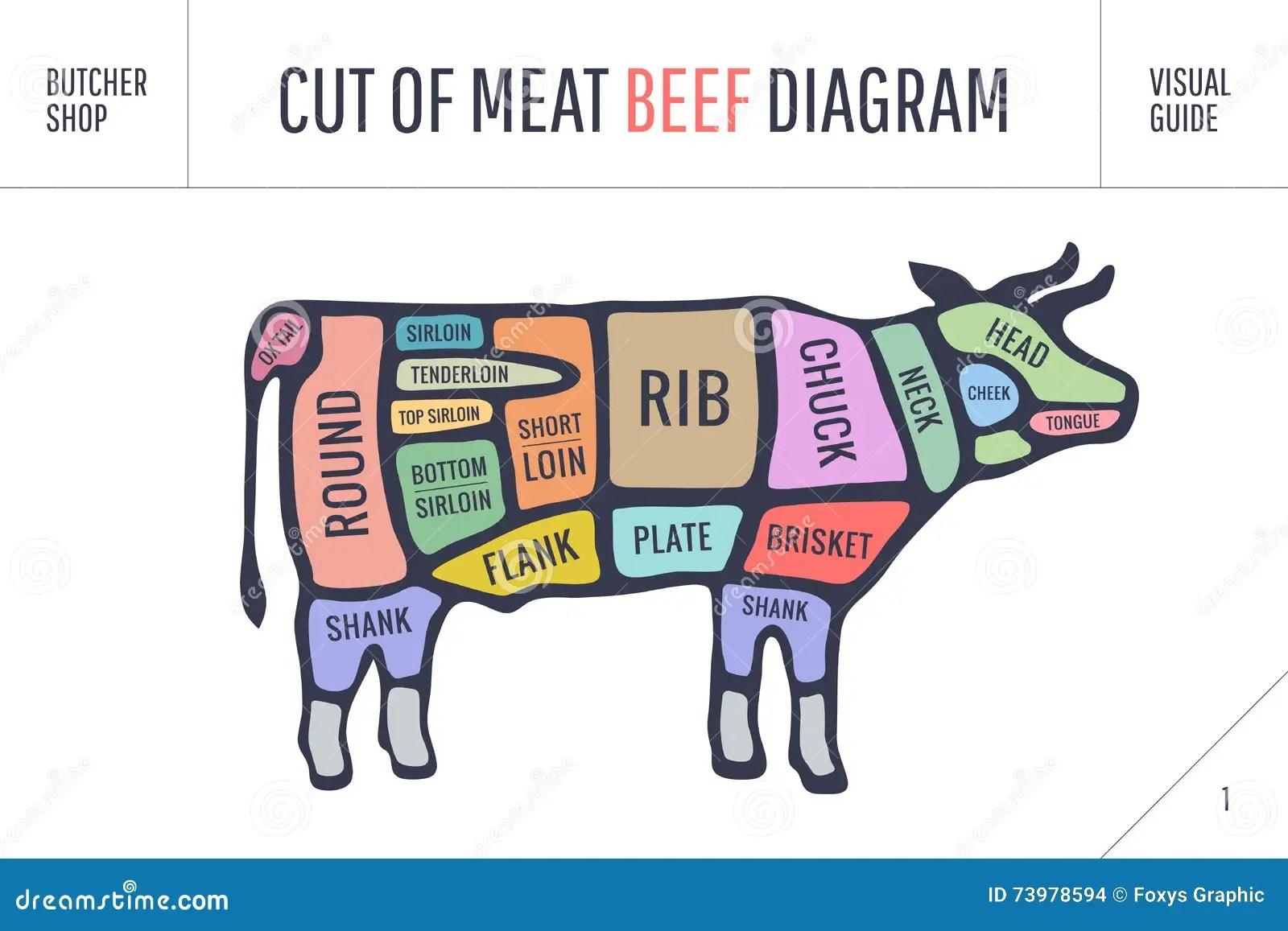 Corte Del Sistema De La Carne Diagrama Y Esquema