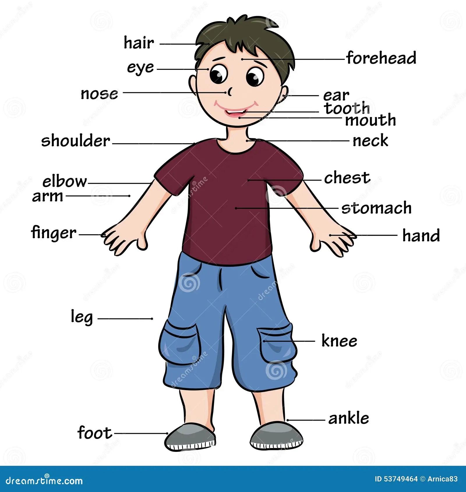 Crianca Dos Desenhos Animados Vocabulario Das Partes Do